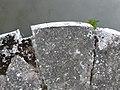 Grand Union Canal - geograph.org.uk - 860927.jpg