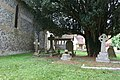 Graves under the yew - geograph.org.uk - 1561453.jpg