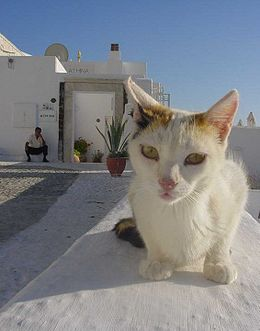 Greece-Cat.jpg