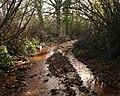 Green lane near Aish - geograph.org.uk - 1061764.jpg