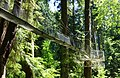 Greenheart TreeWalk - UBC Botanical Garden - Vancouver, Canada - DSC08050.jpg