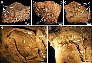 2017 in paleontology - Isaberrysaura