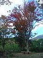 Hakone Ashinoko lake dsc05541.jpg