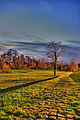 Hanau in November.jpg