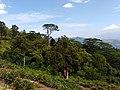 Hanthana. Galaha - Hanthana - Kandy road. Image 001.jpg
