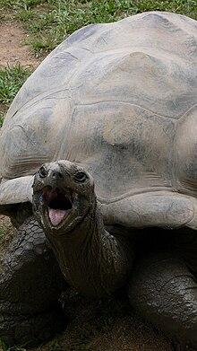 Harriet tortoise wikipedia harriet sticking out her tongueg publicscrutiny Gallery