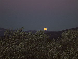 A harvest moon rising over the hills in Proven...