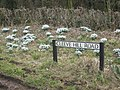 Hedge and Bank in Cleeve Hill Road with snowdrops - geograph.org.uk - 1173506.jpg