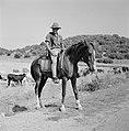 Herder te paard met kudde runderen in een heuvelachtig en boomrijk landschap, Bestanddeelnr 255-4626.jpg