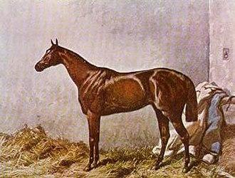 Hermit (horse) - Image: Hermit (GB)