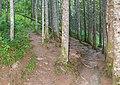 Hiking path Lac des Plagnes (2).jpg