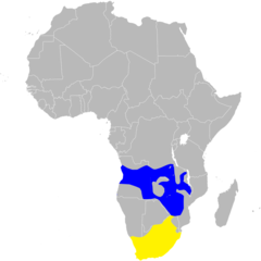 Hirundo albigularis distribution map, sans legend.png