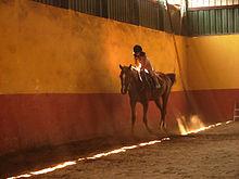 Horse-Riding-07694-nevit.jpg
