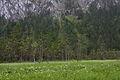ID 1568 Moor bei Rotmoos 1.JPG