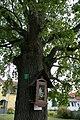 ID OP046 Stieleiche Oberloisdorf 001.jpg