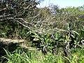 Iguape - SP - panoramio (272).jpg