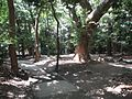 Ikuta Shrine - panoramio (17).jpg