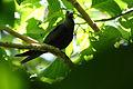 Ile Aride - Oiseau (14).JPG