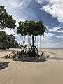 Ilha de Marajó solitaria.jpg