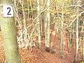 Im Staatsforst Gerolstein - geo.hlipp.de - 6560.jpg