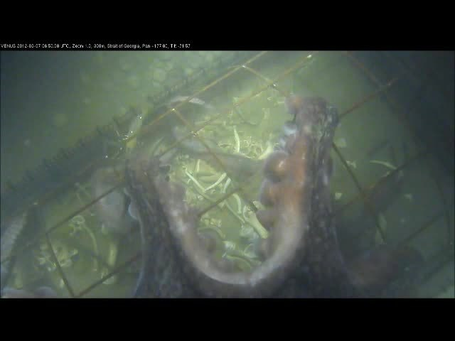Here's What Happens to a Dead Body at The Bottom of The Sea