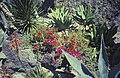 Ischia1987-11 hg.jpg