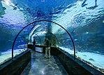 Isfahan Aquarium I2.jpg