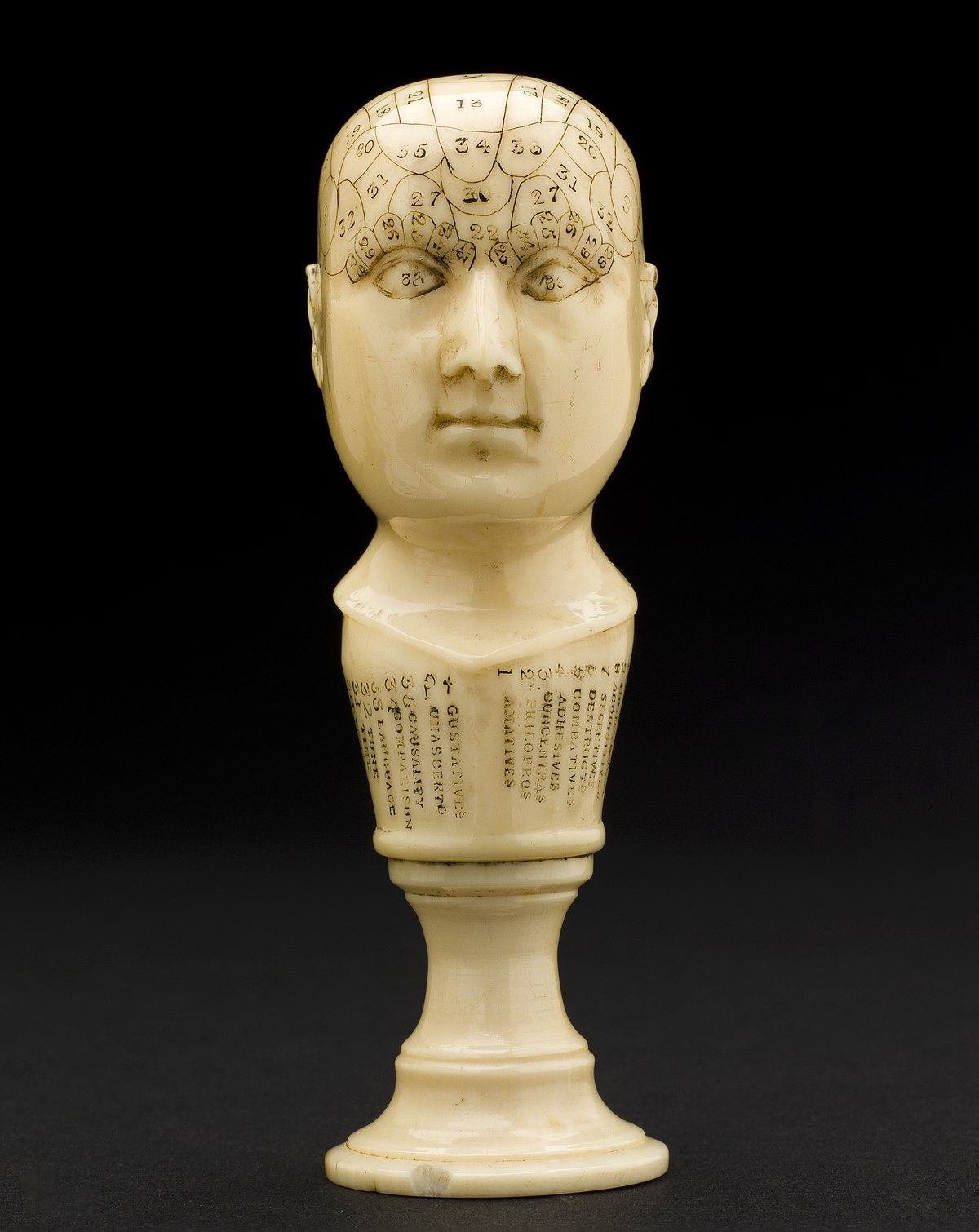 File Ivory Phrenological Head Europe