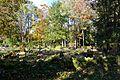 Järvakandi kalmistu.jpg