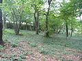 Jókai kertje 2012 (43).JPG