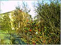 January Frost Botanic Garden Freiburg - Master Botany Photography 2014 - panoramio (4).jpg