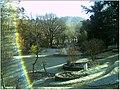 January Frost Botanic Garden Freiburg - Master Botany Photography 2014 - series Germany Diamond pictures - panoramio (7).jpg