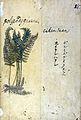 Japanese Herbal, 17th century Wellcome L0030107.jpg