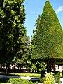 Jardin of Residenz, Würzburg, 22 Aug 2010 - panoramio - anagh (13).jpg