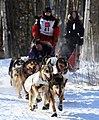 Jen Seavy's Iditarod sled dog team comin' round the bend (3420562034).jpg