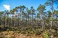 Jersikas pagasts, Latvia - panoramio (14).jpg