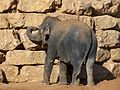 Jerusalem Biblical Zoo029.jpg