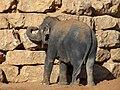 Jerusalem Biblical Zoo029.jpg
