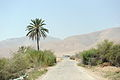 Jordan Valley, West Bank 145 - Aug 2011.jpg