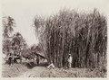 KITLV - 30197 - Kurkdjian, N.V. Photografisch Atelier - Soerabaja - Sugar company in East Java - 1921.tif