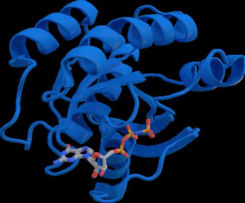 Hypohidrotic Ectodermal Dysplasia