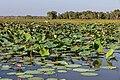Kakadu (AU), Kakadu National Park, Yellow Water -- 2019 -- 3957.jpg