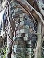 Kam Tin Tree House - 2007-09-30 14h01m58s SN200799.jpg