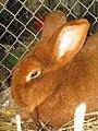 Kaninchen1.jpg