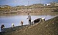 Kars Yaylası 06 1989 Yalınkaya Dorfweiher.jpg