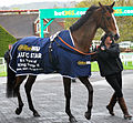 Kauto Star at Sandown.jpg