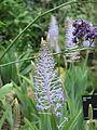 Kew Gardens - London - September 2008 (2955039387).jpg