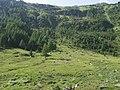 Knuttental, Valle dei Dossi - panoramio (10).jpg