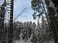Komarovo, Ivanovskaya oblast', Russia, 155412 - panoramio.jpg