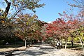 Korea-Buan County-Trees at Naesosa in Autumn-01.jpg